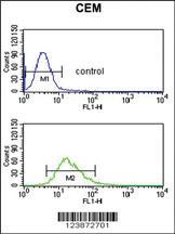 Anti-DMC1 Rabbit Polyclonal Antibody