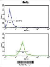 Anti-GALNT2 Rabbit Polyclonal Antibody