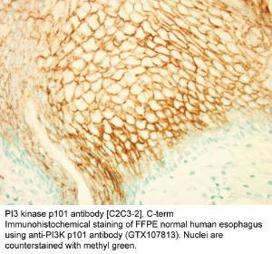 Anti-West Nile Virus Matrix Rabbit Polyclonal Antibody