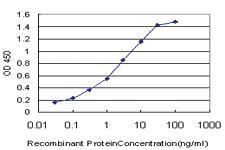 Anti-ACAN Mouse Monoclonal Antibody [clone: 2A8]