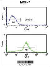 Anti-MOB2 Rabbit Polyclonal Antibody
