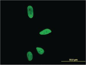 Anti-CD3EAP Mouse Monoclonal Antibody [clone: 6A6]