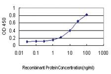 Anti-SH2D3C Mouse Monoclonal Antibody [clone: 1B6]