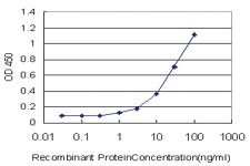 Anti-SH2D3C Mouse Monoclonal Antibody [clone: 2G1]