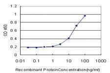 Anti-HPSE1 Mouse Monoclonal Antibody [clone: 4D7]