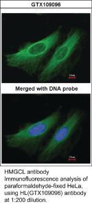 Anti-ARMC6 Rabbit Polyclonal Antibody