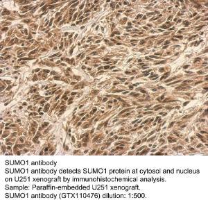 Anti-TMEM30B Rabbit Polyclonal Antibody