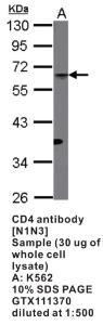 Anti-CD4 Rabbit Polyclonal Antibody