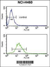 Anti-CCNB1IP1 Rabbit Polyclonal Antibody