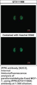 Anti-IPPK Rabbit Polyclonal Antibody