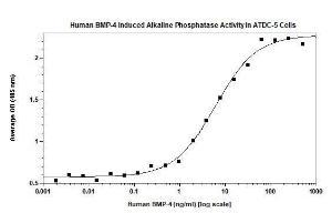 Human Bone Morphogenetic Protein-4