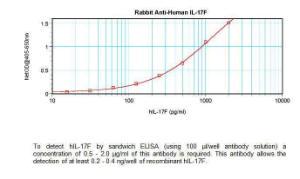 Anti-IL17F Rabbit Polyclonal Antibody