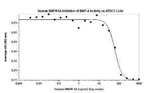 Human BMPR-1A/ALK-3, Fc Tag