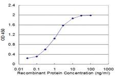 Anti-COX17 Mouse Monoclonal Antibody [clone: 1A9]