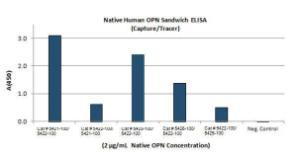 Anti-OPN Mouse Monoclonal Antibody [clone: 2C5]