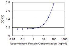 Anti-PHB2 Mouse Monoclonal Antibody [clone: 2D3]