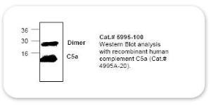 Anti-C5a Rabbit Polyclonal Antibody