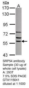Anti-TSC1 Rabbit Polyclonal Antibody