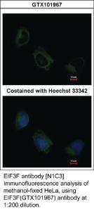 Anti-SNX9 Rabbit Polyclonal Antibody