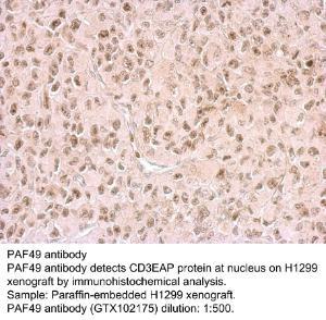 Anti-SDR9C7 Rabbit Polyclonal Antibody