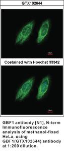 Anti-GBF1 Rabbit Polyclonal Antibody