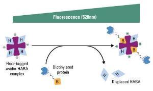 Pierce™ Fluorescence Biotin Quantitation Kit, Thermo Scientific