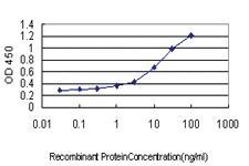 Anti-GADD45G Mouse Monoclonal Antibody [clone: 1D3]
