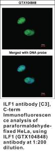 Anti-FOXK2 Rabbit Polyclonal Antibody