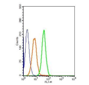 Anti-NOS3 Rabbit Polyclonal Antibody (FITC (Fluorescein Isothiocyanate))