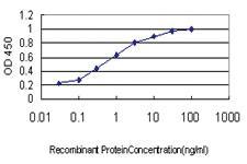 Anti-RALBP1 Mouse Monoclonal Antibody [clone: 2A1]