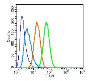 Anti-SYNPO Rabbit Polyclonal Antibody