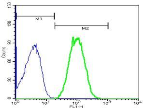 Anti-CR2 Rabbit Polyclonal Antibody