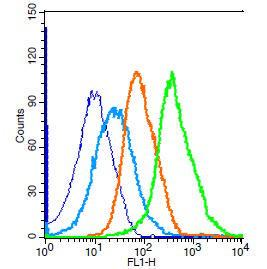 Anti-PRDX1 Rabbit Polyclonal Antibody