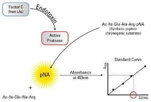 Pierce™ LAL Chromogenic Endotoxin Quantitation Kit, Thermo Scientific