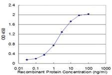 Anti-FAS Mouse Monoclonal Antibody [clone: 7F12]