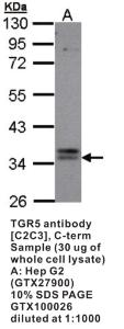 Anti-GPBAR1 Rabbit Polyclonal Antibody
