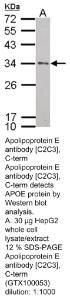 Anti-APOE Rabbit Polyclonal Antibody