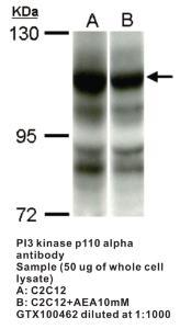 Anti-P110A Rabbit Polyclonal Antibody