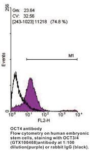 Anti-POU5F1 Rabbit Polyclonal Antibody