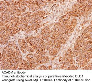 Anti-WNT5A Rabbit Polyclonal Antibody