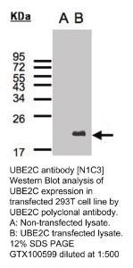 Anti-EP300 Rabbit Polyclonal Antibody