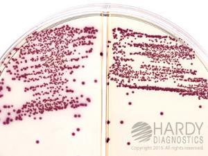 Lauryl Tryptose Broth, Hardy Diagnostics