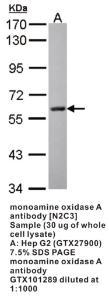 Anti-MAOA Rabbit Polyclonal Antibody