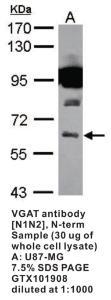 Anti-SLC32A1 Rabbit Polyclonal Antibody