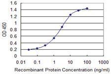 Anti-ENAM Mouse Monoclonal Antibody [clone: 2C12]