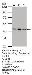 Anti-RIT2 Rabbit Polyclonal Antibody