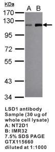 Anti-LSD1 Rabbit Polyclonal Antibody