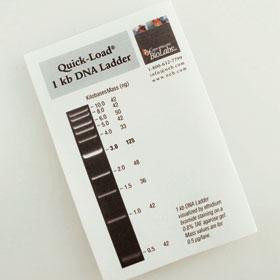 Quick-Load 1 kb DNA Ladder - 125 gel lanes
