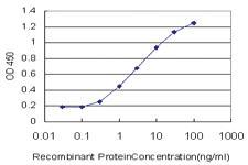 Anti-AKAP9 Mouse Monoclonal Antibody [clone: 1A6]