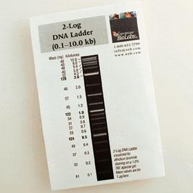 2-Log DNA Ladder - 100-200 gel lanes